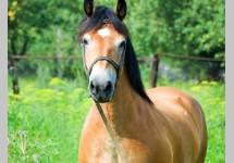 horse_v8.jpg